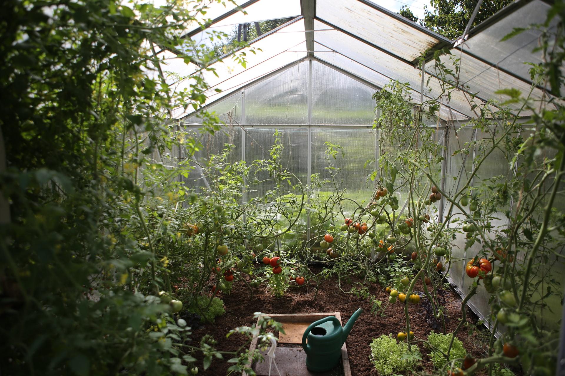 greenhouse full of vegetables