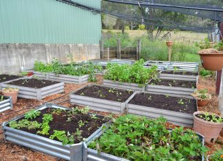 container garden beds