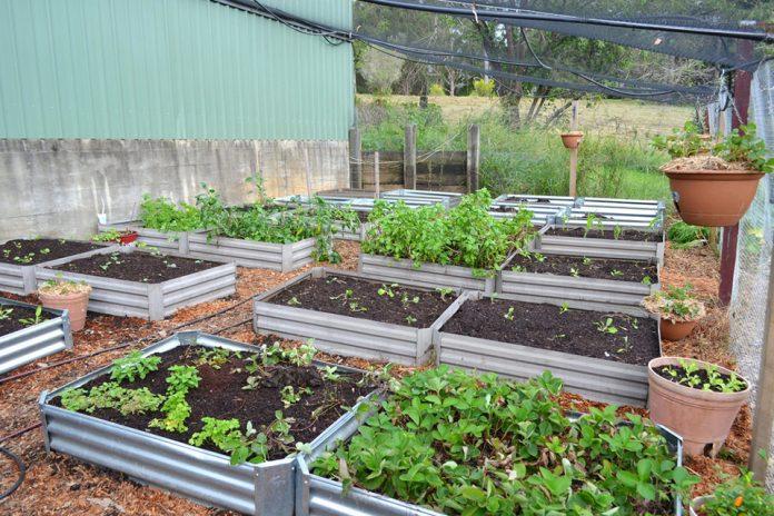 container garden beds