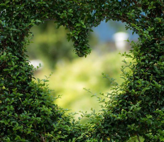 a heart shape in the garden