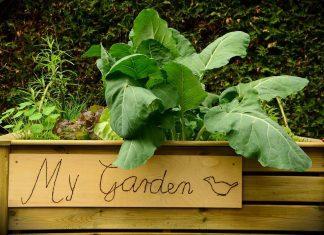 raised vegetable garden beds garden-raised-bed-bed-plant