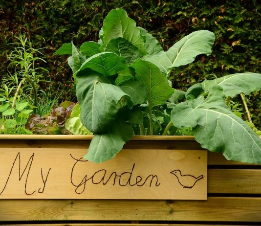raised vegetable garden beds garden-raised-bed-bed-plant