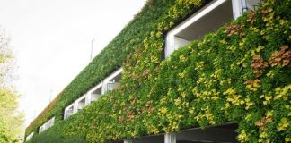 What Is a Green Wall Learn to Build and Maintain One