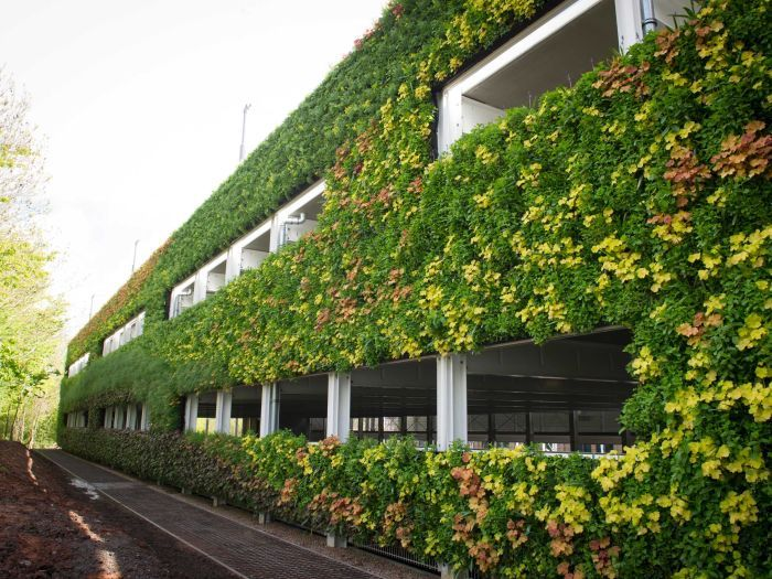 Green Wall What Is It And How To Build One Your