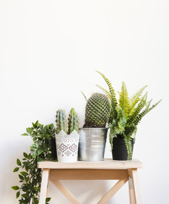 plants-and-cactus-on-stool