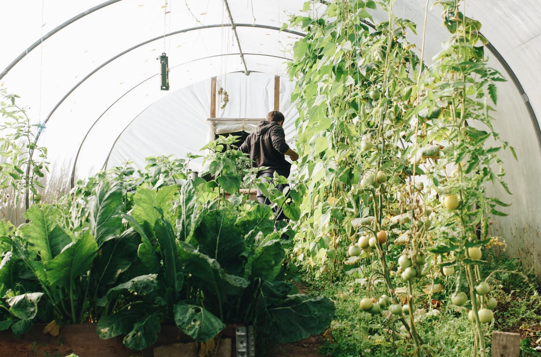 agriculture-aliments-arbres-botanique
