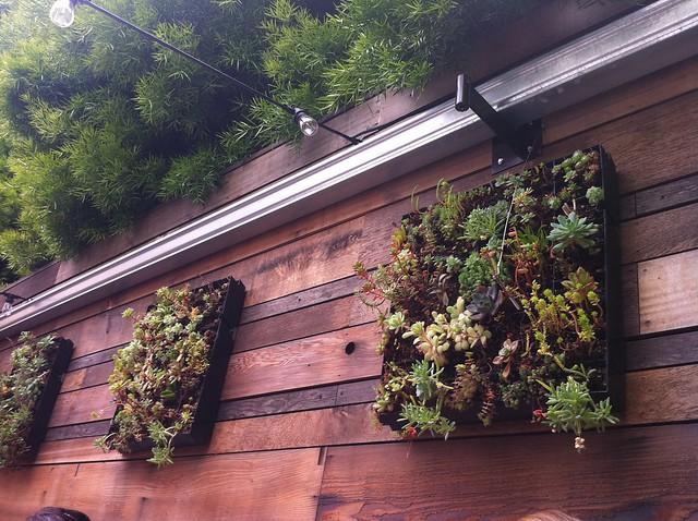 boxed vertical garden
