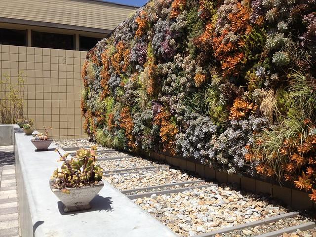 vertical succulent wall