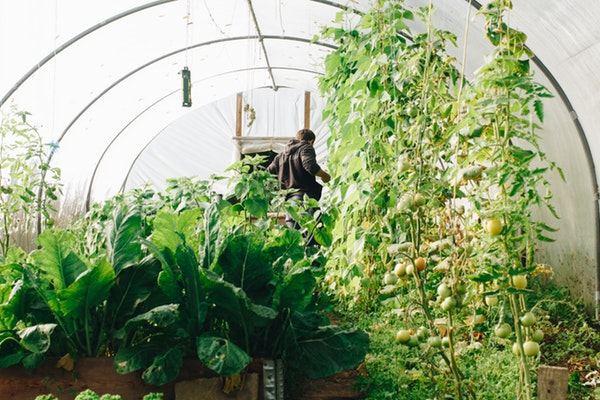 man inside hoop greenhouse
