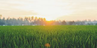 does grass seed expire