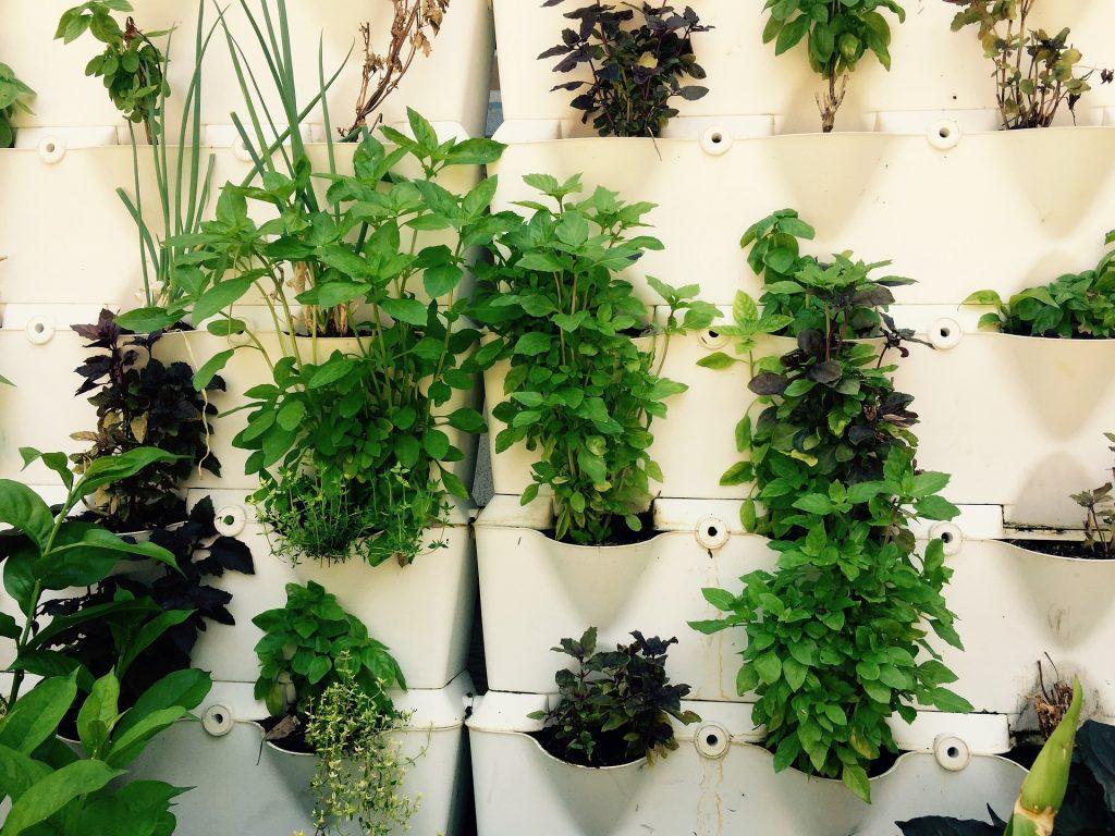 A vertical herb garden